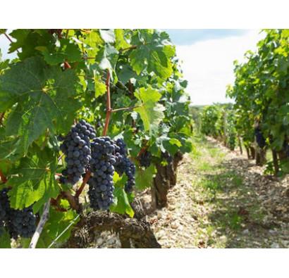 Autres Bordeaux