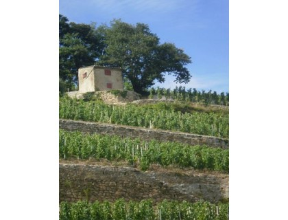 Domaine Guillaume Gilles